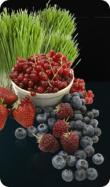 shakeo berries